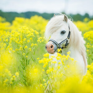 Evening Talk with Lorraine Dearnley: Metabolic Issues in Horses 5 June 7 – 9pm