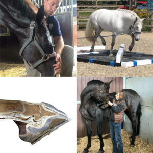 An Integrated Approach to Treating the Whole Horse – Monday 15 July at 7pm