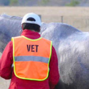 Endurance Evening Talk – A closer look at vetting and the vet's role in endurance 21 March