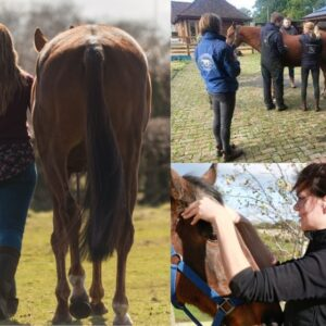 Evening Talk: Treating & Training the Crooked Horse on 14 January