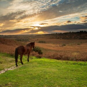 Evening Talk – How Good is Your Pasture Management and what can we learn from the New Forest on 12 Feb?