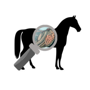 Evening Talk: 7 Steps to Healthy Gut and a Happy Horse – will be rescheduled